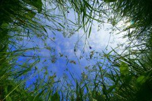 вид из травы на небо необычный ракурс