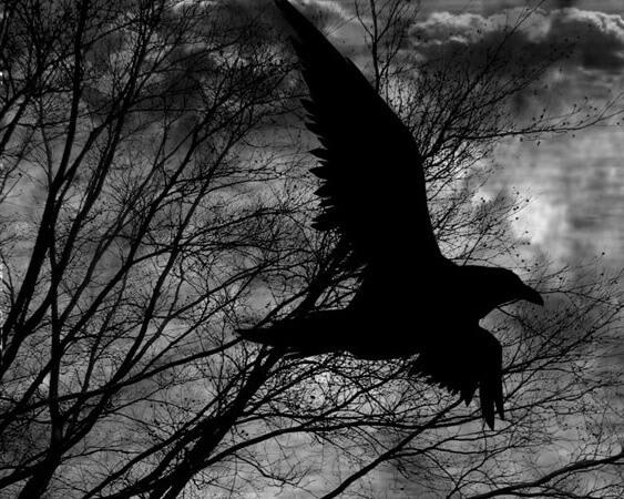 Tha raven